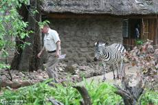 IMG 8153-Kenya, Mara Buffalo Camp manager with his zebra called Milia